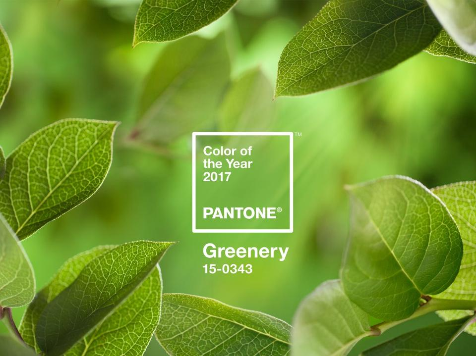 PANTONE Color of the Year 2017 Greenery 15 0343 leaves 2732x2048